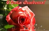 Открытка с Днем Рождения, цветок, роза