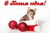 Открытка с Новым годом, животные, кот в новогодней шапке Деда <u>железнодорожника поздравляю с днем рождения</u> Мороза-Санта Клауса и елочные игрушки