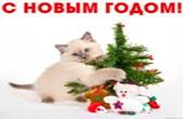 Открытка с Новым годом, животные, котенок и новогодняя елка