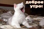 Открытка с добрым утром, животные, котята