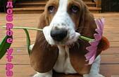 Открытка с добрым утром, животные, собака и цветок