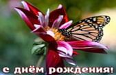 Открытка с Днем Рождения, цветок и бабочка