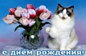 Открытка с Днем Рождения, животные, кот и букет тюльпанов