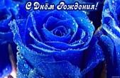 Открытка с Днем Рождения, цветы, синие розы