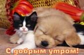 Открытка с добрым утром, животные, котенок и щенок