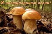 Открытка с наступлением осени, грибы