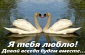 Открытка я тебя люблю, давай всегда будем вместе, лебеди