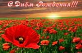 Открытка с Днем Рождения, цветы, красные маки