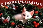 Открытка с Новым годом, животные, котенок и елка