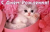 Открытка с Днем Рождения, котенок