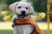 Открытка с Днем Рождения, собака и цветы