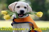 Открытка поздравляю с 8 марта, тюльпаны и собака