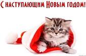 Открытка с Новым годом, животные, котенок в шапке Деда Мороза-Санта Клауса