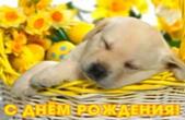Открытка с Днем Рождения, щенок и цветы в корзине