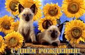 Открытка с Днем Рождения, животные, котята и подсолнухи