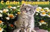Открытка с Днем Рождения, животные и цветы, котенок и ромашки