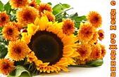 Открытка с Днем Рождения, осенние цветы, подсолнух