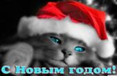 Открытка с Новым годом, животные, кот в новогодней шапке Деда Мороза-Санта Клауса