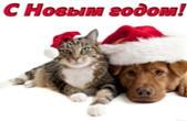 Открытка с Новым годом, животные, кот и собака в новогодних шапках Деда Мороза/Санта Клауса