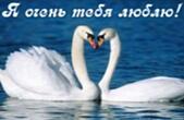 Открытка я очень тебя люблю, лебеди