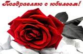 Открытка Поздравляю с юбилеем, цветы, красная роза